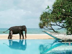srilanka40_1_big