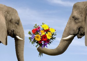 elephant_with_flower_bucket_1024x768