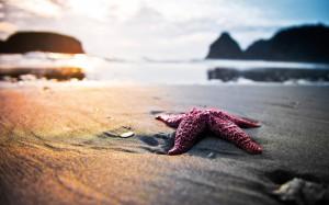 239193__starfish_p